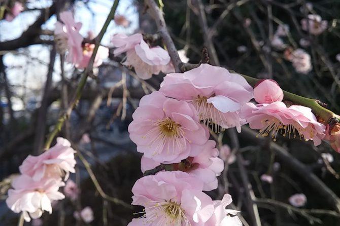 4月8日は花まつり。○○○○の誕生日です!