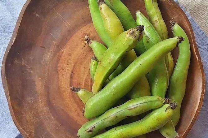 【簡単レシピ】空に向かって伸びるそら豆。~旬を美味しく食べよう!