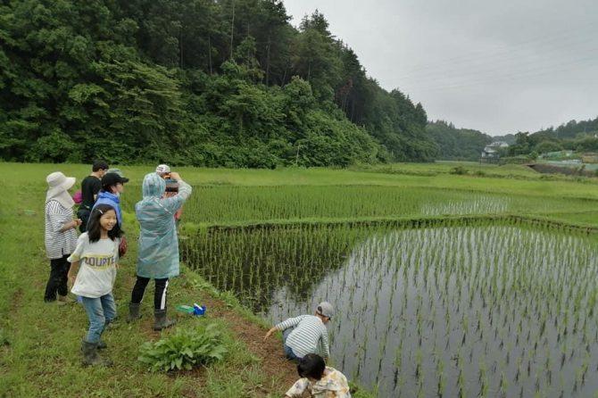 大豆を植える準備&田んぼのある風景♪〜「たねのこプロジェクト」レポート