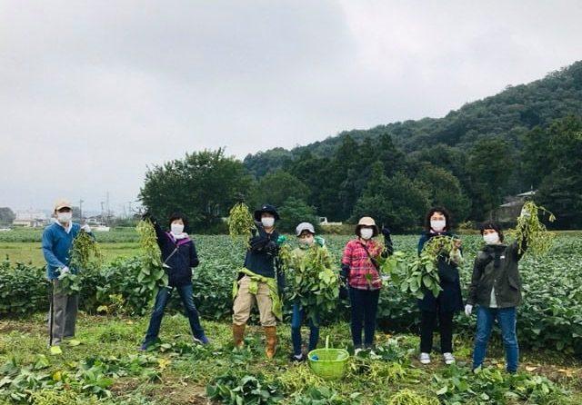 秋の枝豆刈りへ行きました!~横田農場×ワクワクワーク 食農めぐるオーガニックプロジェクト
